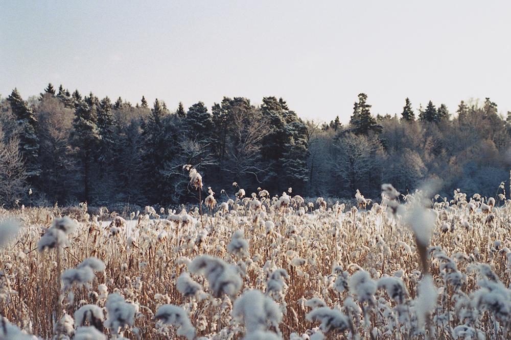 snowy landscape sweden