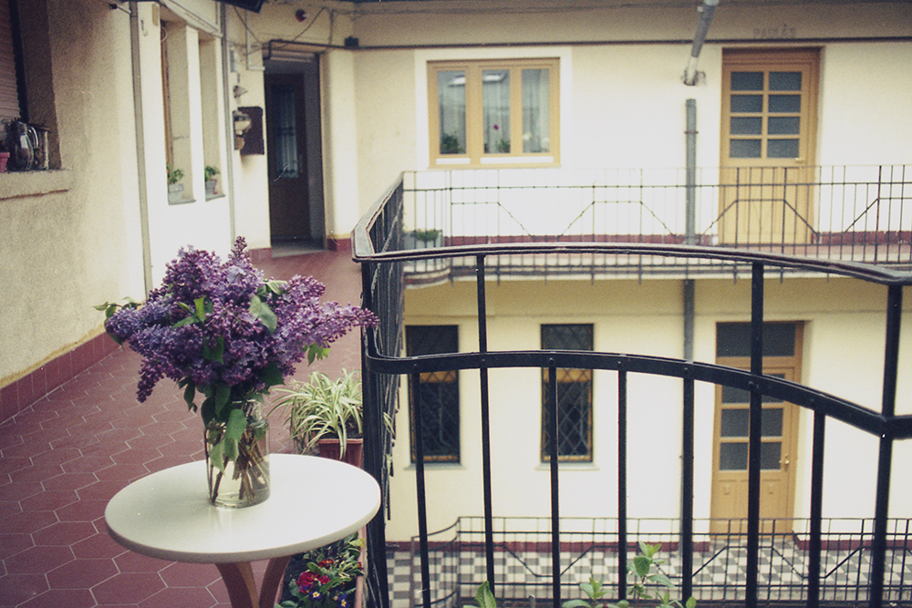 budapest courtyard flowers spring