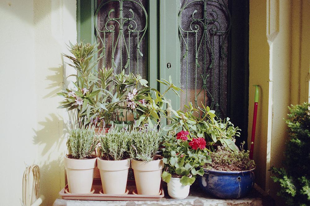 rośliny w doniczkach budapeszt