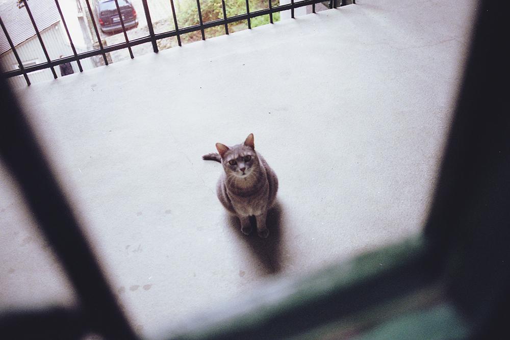 kot w kamienicy
