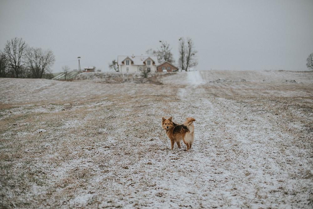 kwaśne jabłko zima pies