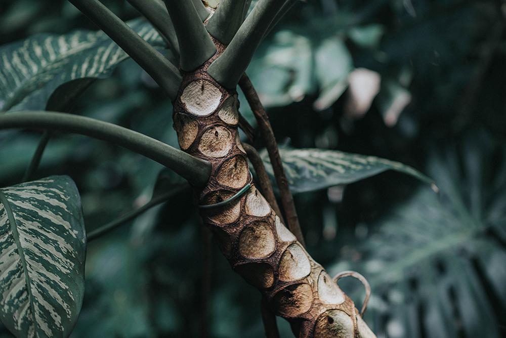 palmiarnia poznań roślina