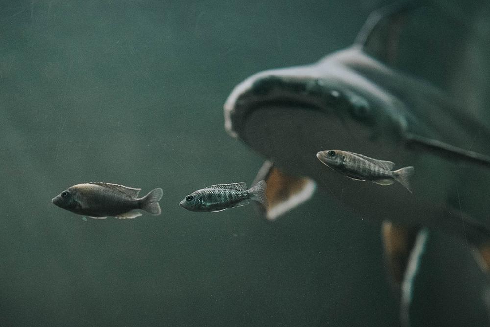 palmiarnia akwarium ryby