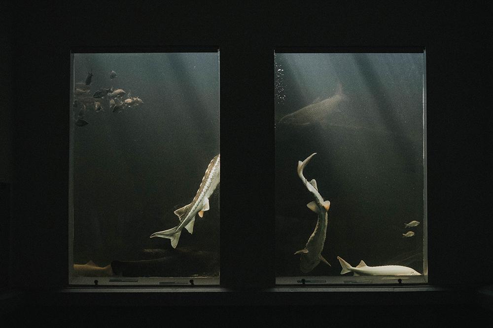 akwarium poznań palmiarnia