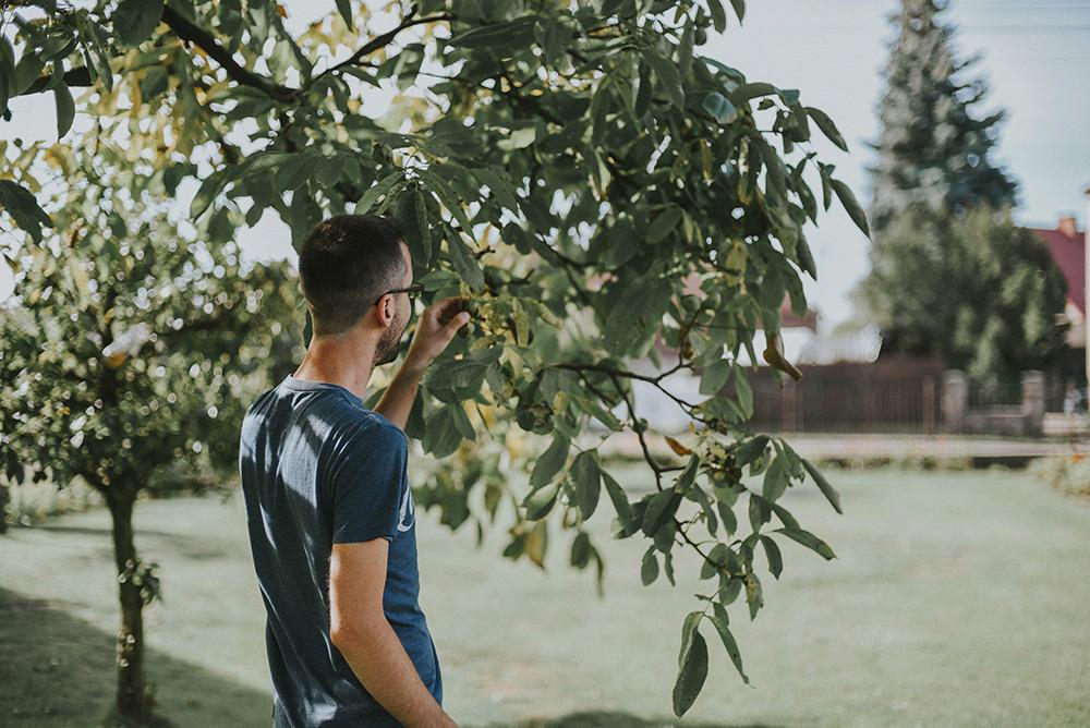 ogród drzewo owoce