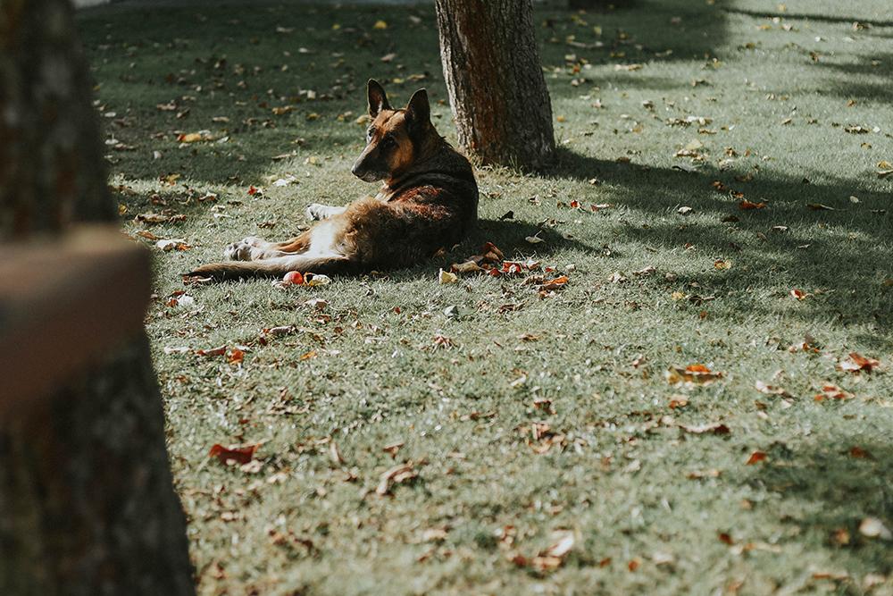 pies w ogrodzie
