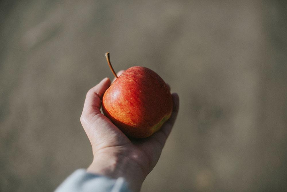 jabłko sad jesień