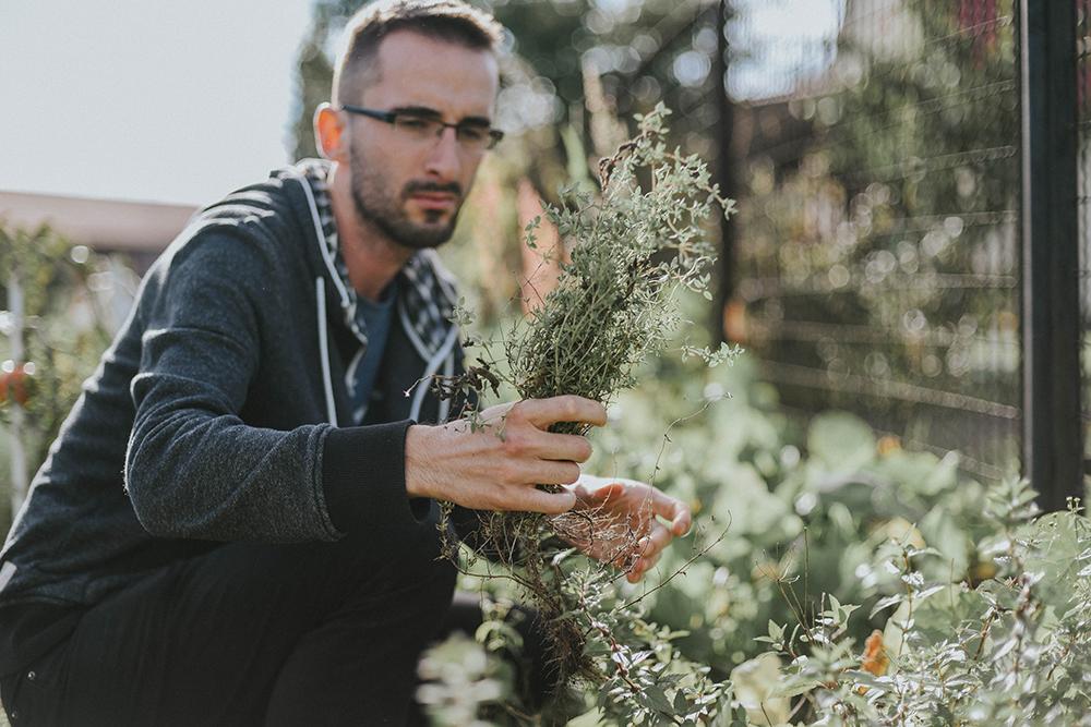 zioła ogród