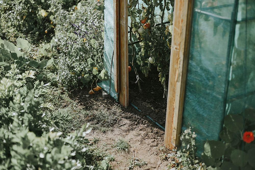 mini szklarnia ogród