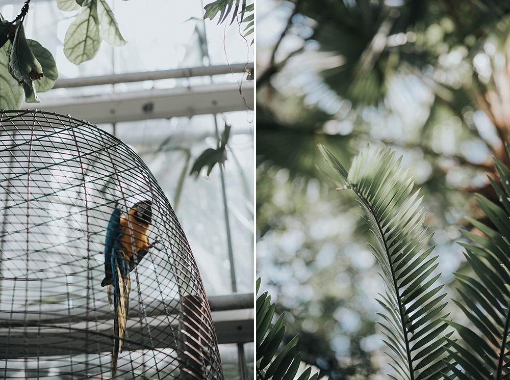 palmiarnia papuga