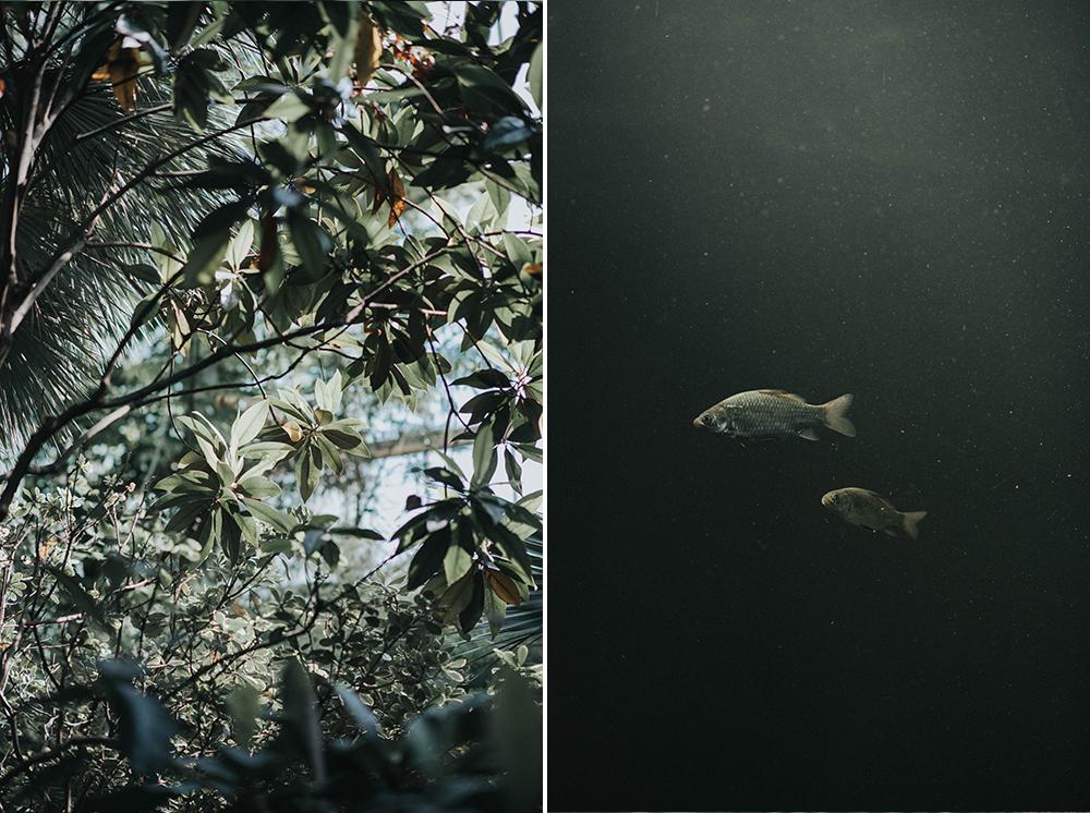 palmiarnia rośliny ryby