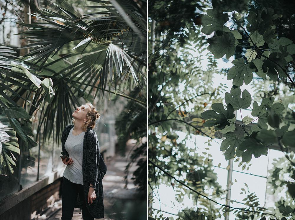 palmiarnia poznań zwiedzanie liście