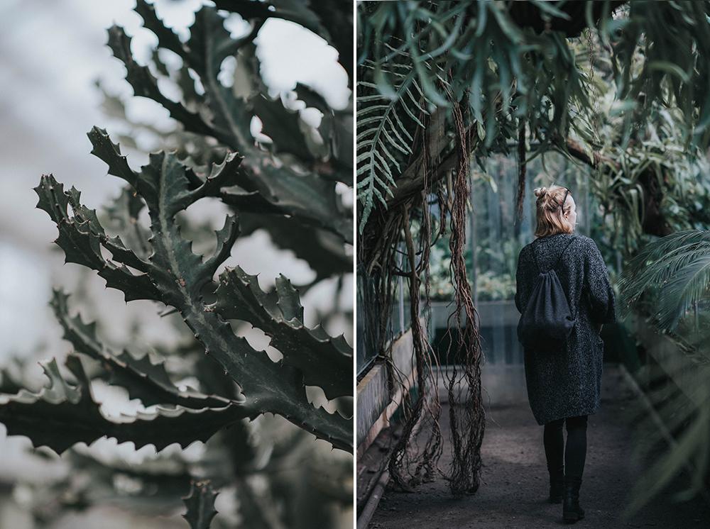 zwiedzanie palmiarni