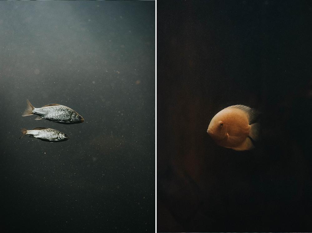 ryby akwarium palmiarnia