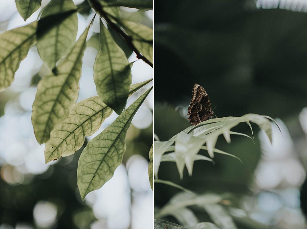 palmiarnia motyl