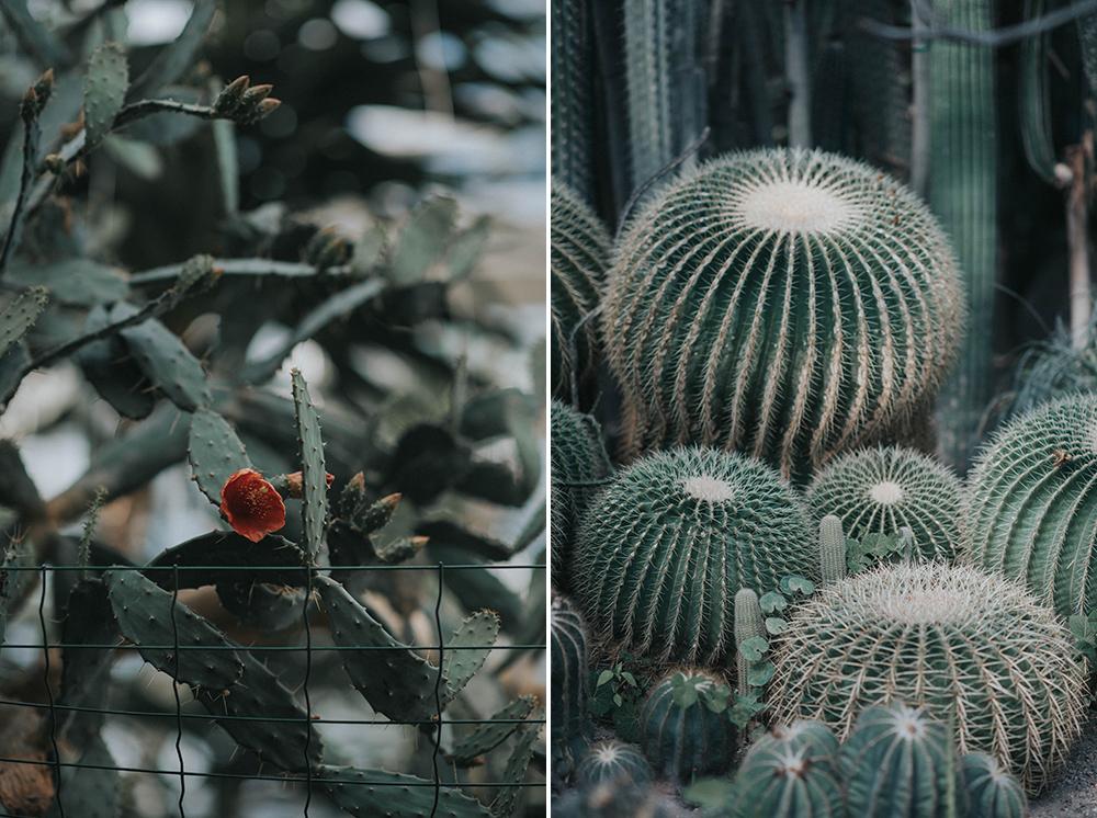 palmiarnia kaktusy
