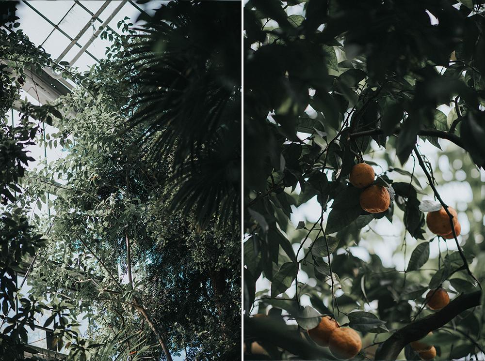 palmiarnia owoce