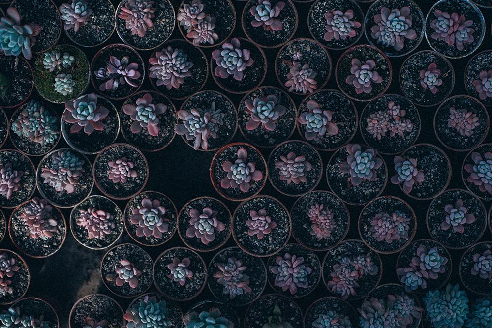 kaktusiarnia mini sukulenty na ślub
