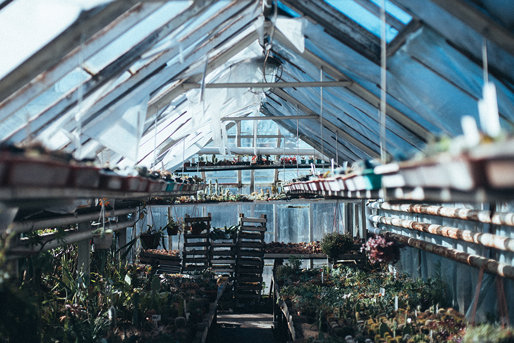 kaktusiarnia rumia hodowlna wystawa szklarnia