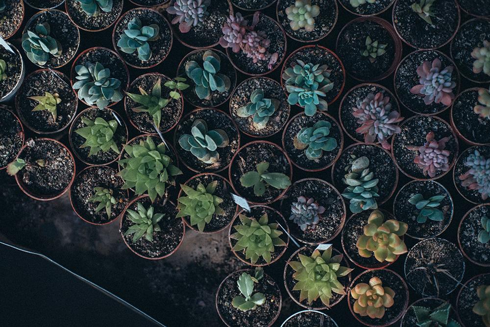 różnokolorowe mini sukulenty