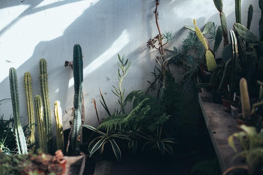 rumia wystawa kaktusów