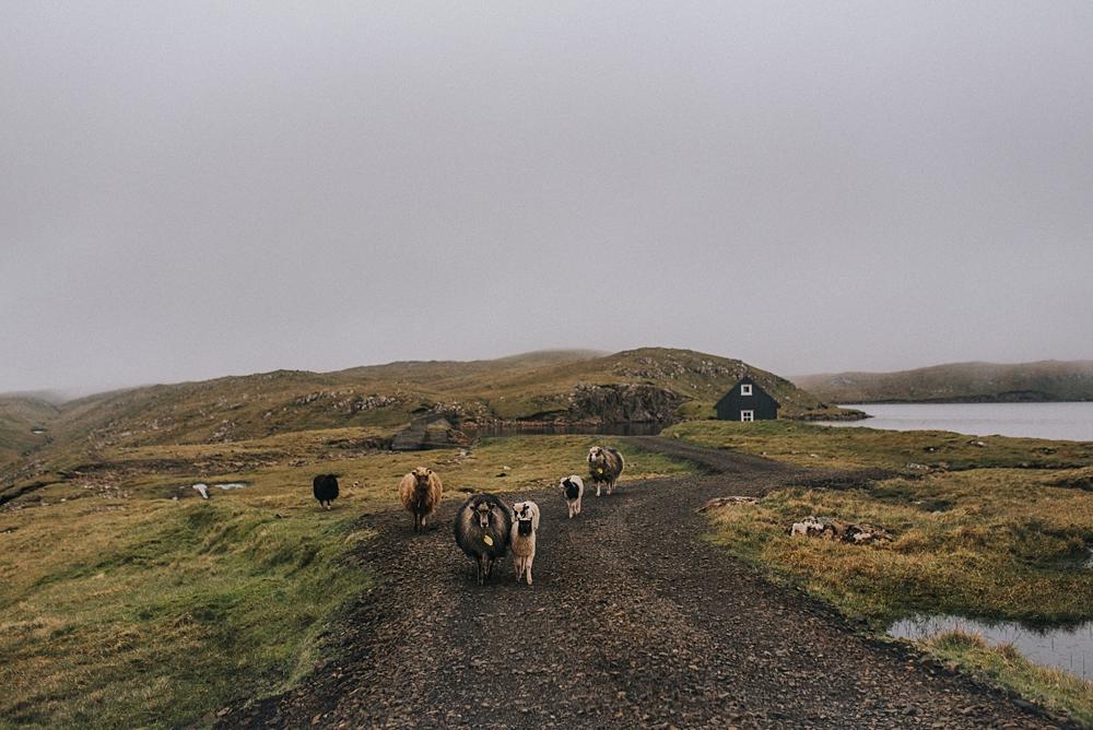 wyspy owcze chatka jezioro owce