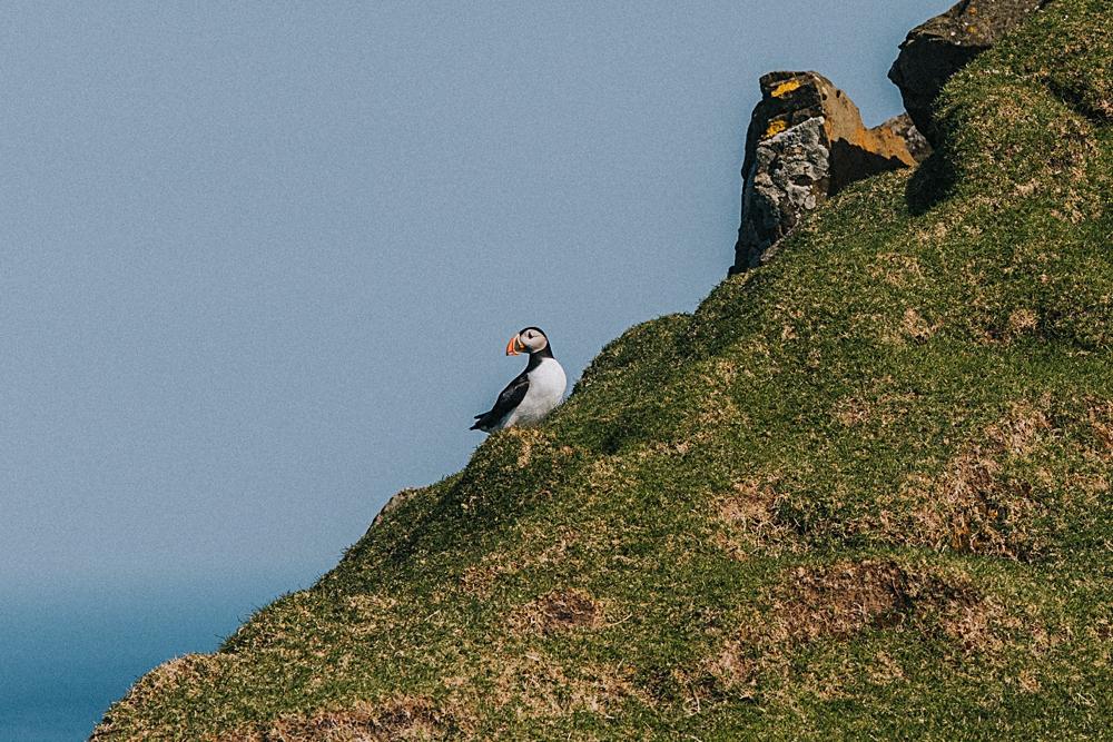 mykines maskonury wyspy owcze klif