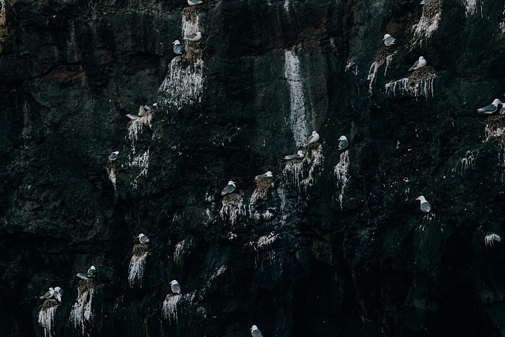 mykines klif ptaki wyspy owcze