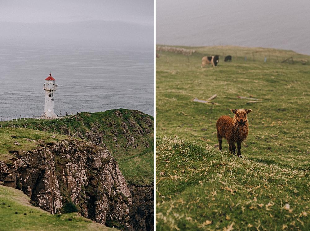 wyspy owcze latarnia owce